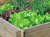 Окрошка и зелень с грядки: неожиданные опасности для организма человека