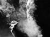 Так ли вредны сигареты? 3 вопроса о курении
