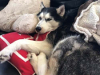 Могут ли собаки обнаруживать злокачественные опухоли у людей?