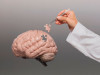 Исследователи назвали 7 правил для защиты мозга от болезни Альцгеймера и слабоумия
