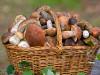 Мифы о пользе и вреде грибов