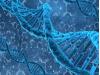 Минздрав не поддержал эксперимент по редактированию генома эмбриона