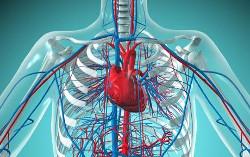 Влияние стресса на развитие заболеваний сердечно-сосудистой системы